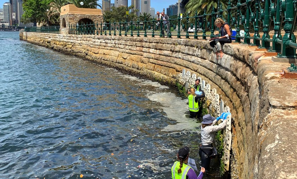 Researchers taking biofilm and chlorophyll measurements at the Living Seawalls installation in Sydney Harbour. Image: Maria Vozzo, SIMS, via Twitter